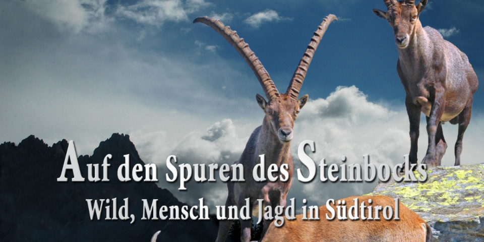 On the trail of the ibex
